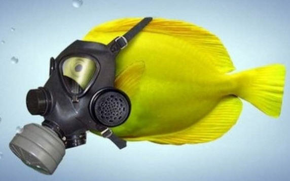 Coronavirus, da Lunedì 4 Maggio è concessa la pesca sportiva e ricreativa: i chiarimenti del Governo e le norme da rispettare
